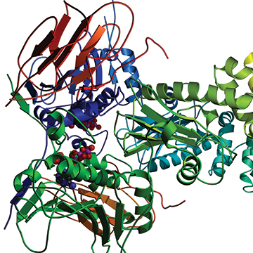 Cell Growth Media and Protein Production